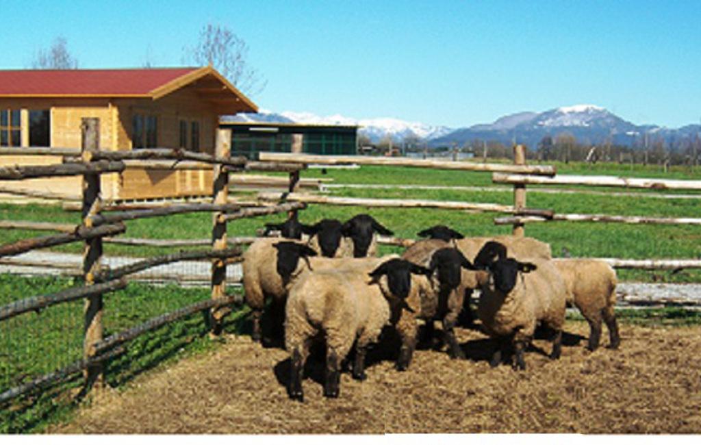 fattoria_didattica_bergomensis_falabella_italia